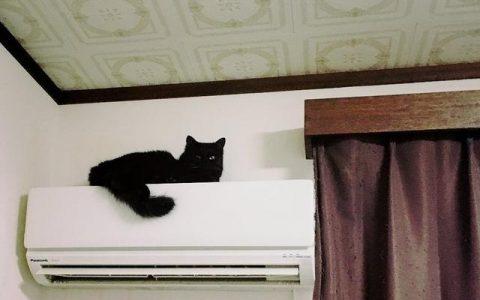 日本网友吐槽:感觉自家猫越来越惹不起了