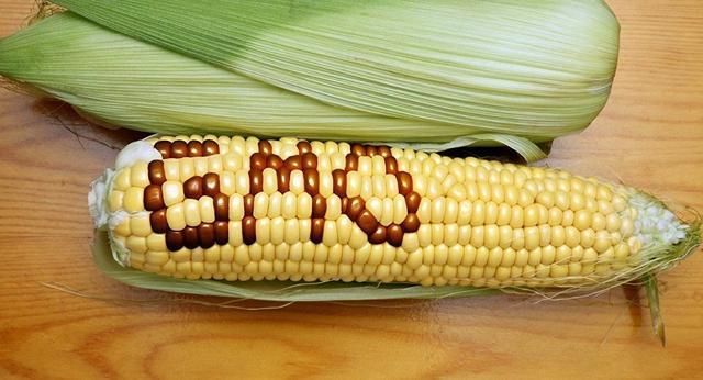 日本如何玩转基因编辑食品