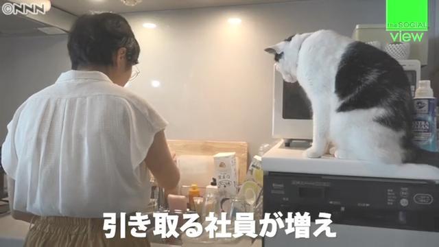 """日本公司发放""""猫补贴"""",主人不仅有钱拿,还能带猫咪一起上班"""