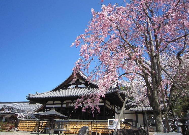 以日本三大文殊菩萨之一闻名的古寺「安倍文殊院」