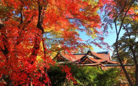 京都11处绝佳赏枫景点,浪漫深秋