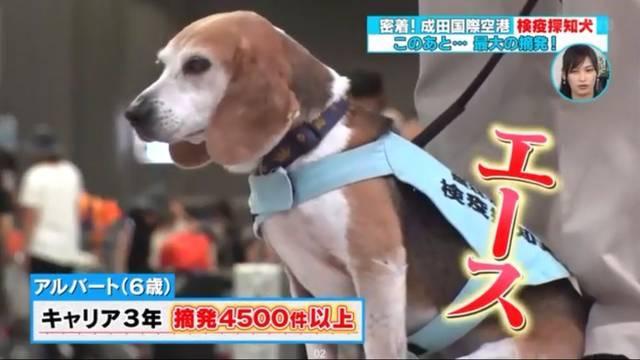 禁止入境日本的8种物品,不要到了登机时才发现