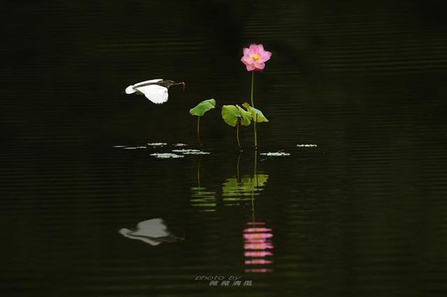 谈日本花道和中国插花艺术中的禅学